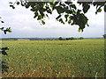 TQ5292 : Farmland off Broxhill Road, Havering-atte-Bower, Essex by John Winfield