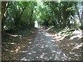 TQ2156 : Ebbisham Lane by Hywel Williams