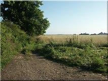TG1507 : Footpath, Little Melton by Katy Walters