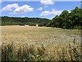 TQ2252 : Rural Land near Buckland by Hywel Williams