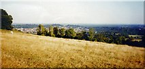TQ1450 : South Edge of Ranmore Common, near Dorking, Surrey by Pete Chapman