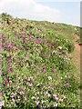 SW7816 : Managed Coastal Heathland on Chynhalls Cliff by Tony Atkin