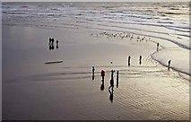 TQ3103 : Brighton Beach. by Christine Matthews