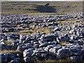 SD7773 : Limestone pavement, Sulber by Dave Bushell