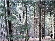NY2427 : Dodd Wood by Bill Payer