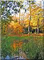 TQ4093 : Lords Bushes Pond by Brian Gotts