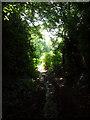 TQ4160 : Crown Ash Hill TN16 by Philip Talmage