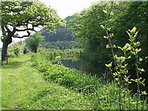 SJ2410 : Montgomery Canal beside the A 483 by John Haynes
