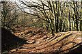 ST1103 : Payhembury: Hembury hillfort by Martin Bodman