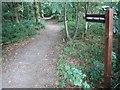 TQ6895 : Norsey Woods, Billericay by Martin Tipper