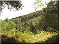SX0570 : Lower Helland Wood by David Hawgood