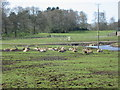 SJ4693 : Knowsley Safari Park by Paul Johnston-Knight