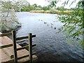 NZ4315 : River Tees, Preston Park by Mick Garratt