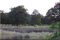 TQ0153 : Sutton Park by Ron Strutt