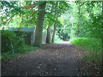 TQ1362 : Bridleway on Esher Common by Andrew Longton
