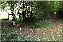 SP0626 : The Wardens Way in Guiting Wood by Philip Halling