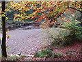 NZ0931 : Bedburn Beck in autumn, Hamsterley Forest by David Hawgood