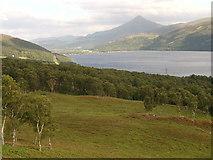 NN6259 : Wooded hillside by Callum Black