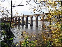 NT9953 : Royal Border Bridge, Berwick by Alan Fearon