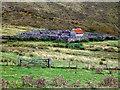 NN9262 : Sheep pens near Old Faskally House. by Peter Ward