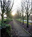 NZ3153 : Tree-lined path on the south bank of the Wear by Alan Fearon