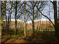 NS9295 : Roadside trees near Muircot by Kirsty Smith