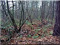 SK5961 : Another WW1 trench, Sherwood Pines Forest Park by Lynne Kirton