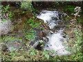 SW4637 : Stream in Foage Valley by Sheila Russell