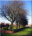 NZ2581 : Bedlington, houses and trees by Alan Fearon