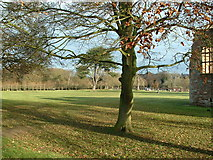 SK6464 : Rufford Country Park by Nigel Homer