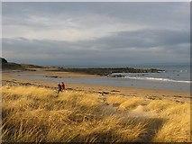 NT5185 : Yellowcraig  Beach by Richard Webb