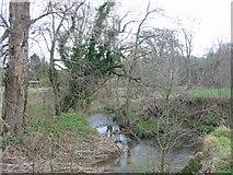 SY4797 : River Brit near Oxbridge by Maurice D Budden
