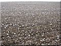 SY7498 : Ploughed field on Cheselbourne West Down by Jim Champion