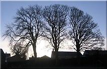 NY0830 : Trees in High Brigham. by John Holmes