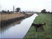 ST4063 : Rhyne draining Puxton Moor by FollowMeChaps