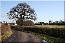 ST0104 : Cullompton: lane between Champerhaies and Westcott by Martin Bodman