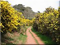 SX4551 : Gorse to the left of me, gorse to the right of me. by Tony Atkin
