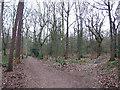 SK3282 : Ecclesall Woods by Mike Fowkes