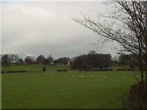 SE3239 : Across the fields to Shadwell Grange, Leeds by Rich Tea