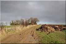 TF3873 : Sutterby Holt by Richard Croft