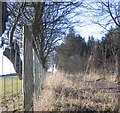 NY4233 : Farm track on the side of the wood. by John Holmes