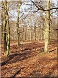 SU8790 : Beech Wood near Little Marlow by David Hawgood