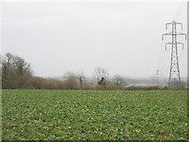 SP6929 : Brasses Spinney by Pip Rolls
