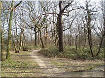 TQ4375 : Woodland at north edge of Eltham Park, Kent by Dr Neil Clifton