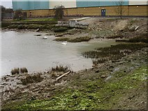 TQ7369 : Muddy creek in Strood by Penny Mayes
