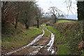 ST0216 : Sampford Peverell: Whitnage Lane by Martin Bodman