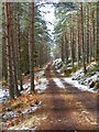 NJ0221 : Forest road on Carn na Loinne by Iain Macaulay