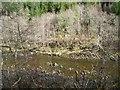 NH3917 : River Moriston by John Allan