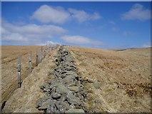 NT1415 : Dyke on Firthhope Rig by Eileen Henderson