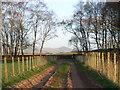 NY6131 : Track next to Crosshow Plantation by Andrew Smith